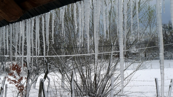 Winter's  Crying