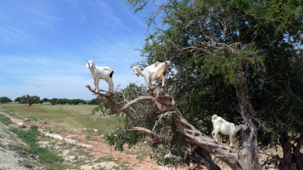 Being The Men Who Stare at Goats