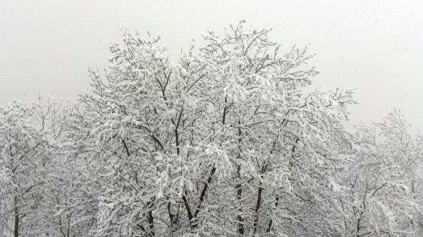 The Snow Prelude