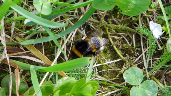 Bumblebee, Bumblebee