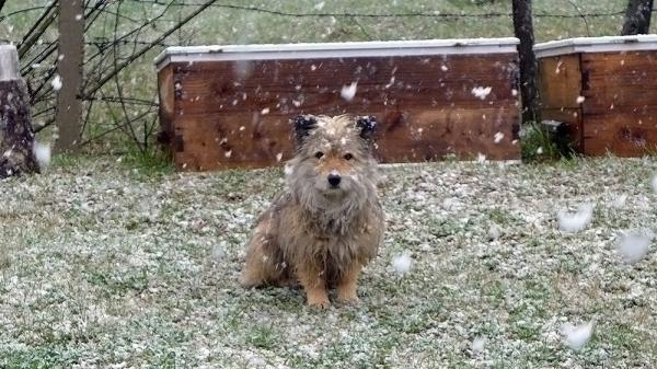Weather Report - Speechless