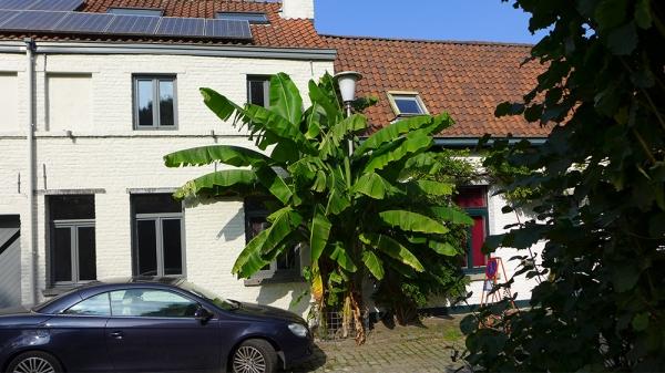 Banana Co.