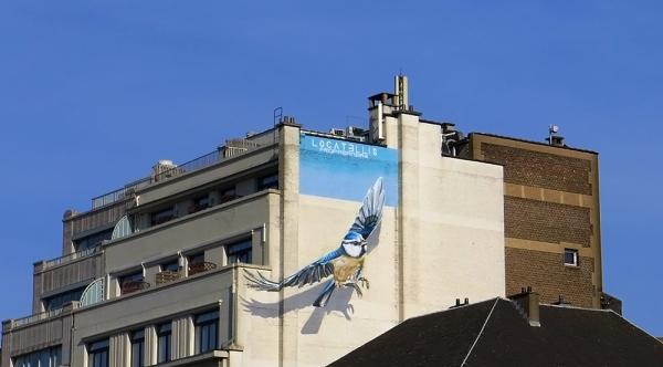 Blue Jay Blue