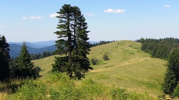Monte Malady